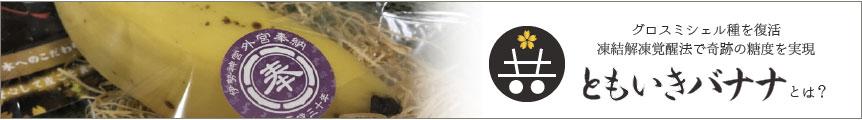 グロスミシェル種を復活 凍結回答覚醒法で奇跡の糖度を実現